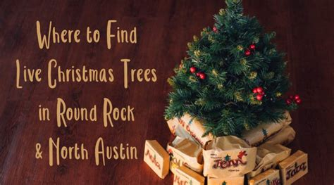 where to find live christmas trees in round rock north