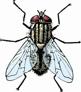 Free Clipart Of A house fly