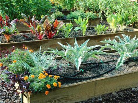 raised bed gardening tips tips for raised beds hgtv