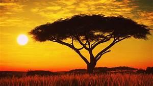 Serengeti, Sunset, 4k, Hd, Nature, 4k, Wallpapers, Images
