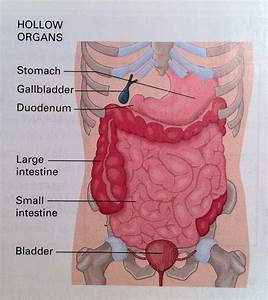 Diagram Ruptured Gallbladder Pain