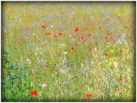 Tapisserie Fleurs by Tapisserie Mille Fleurs Photo Et Image Visions