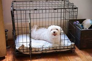 why we love using dog crates daily dog tagdaily dog tag With why crate a dog
