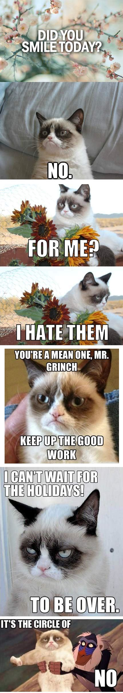 The Best Of Grumpy Cat  The Meta Picture
