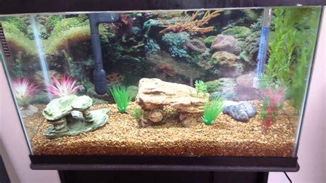 29 gallon freshwater aquarium setup