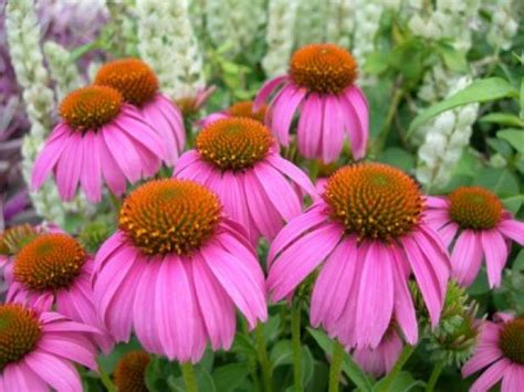 plants that grow in clay soil and shade plants that thrive in clay soil hgtv