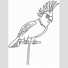 Parrot Animals Coloring Pages & Coloring Book