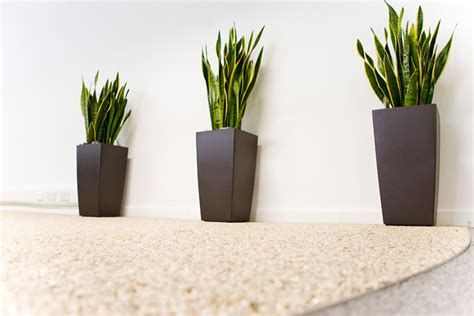 office plants bolton manchester cheshire lancashire