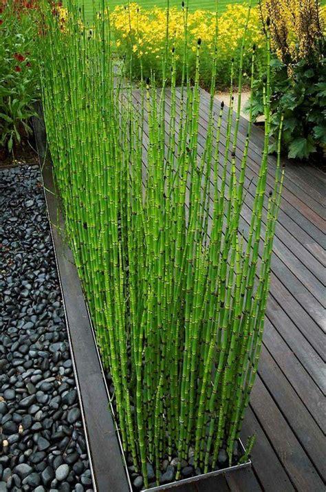 engrais pour bambou exterieur 17 meilleures id 233 es 224 propos de haies sur