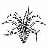 Grass Coloring Drawing Printable Eating Template Sketch Drawings Colorluna Luna Getdrawings Animal Grow Well sketch template