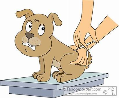 Clipart Dog Vaccination Getting Animal Shots Vaccine