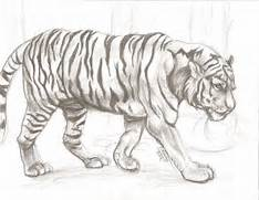 drawing animals for beginners - Google Search   animals drawings    Jungle Drawing With Animals