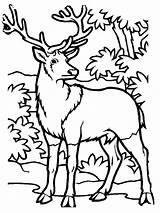 Coloring Elk Deer Printable Allatok Erdei Animal Chevreuil Hunting Crafts Kifestok Sheets Adult Simple Rajzolasa Bonnie Runge Kid Template Rajzok sketch template