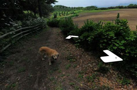 Cachorro Segue Aparelho Do Google Street View E Aparece Em