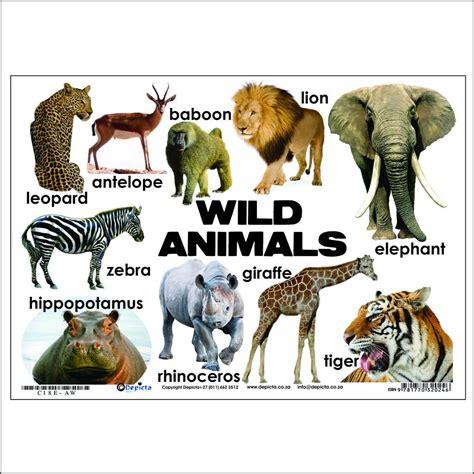 wild animals chart animals chart depicta charts