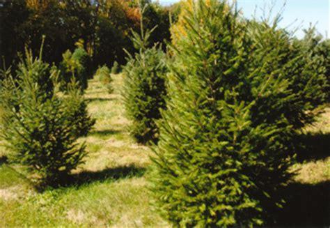 christmas memories tree farm kentucky christmas tree association