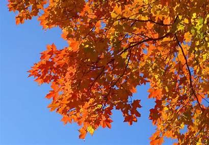 Fall Foliage Leaves Season Close Boston Drought