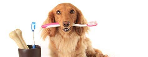 dog toothbrush set boshel veterinarian
