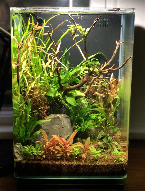 Aquascape Nano by Low Tech Nano Aquascape Aquascape