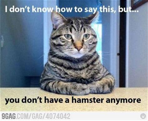 Awkward Cat Meme - funny awkward moments 24 pics