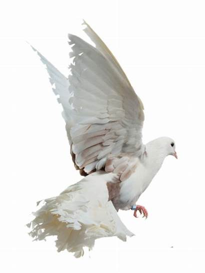 Bird Birds Eross Deviantart Library Clipart Single