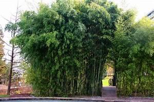 Bambus Im Garten : bambus im garten ihr ideales zuhause stil ~ Michelbontemps.com Haus und Dekorationen