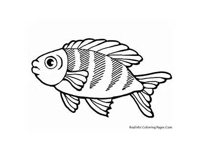 Fish Coloring Pages Realistic Printable Sea Drawing