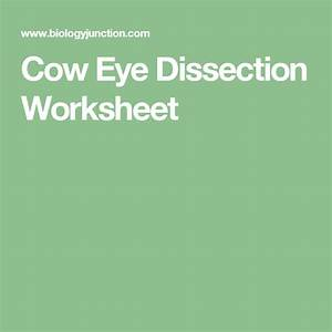 Cow Eye Dissection Worksheet