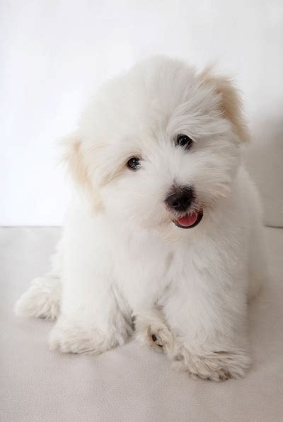 dog breeds  small apartments top dog tips