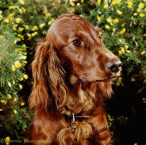 choosing a dog breed right for you canadogs
