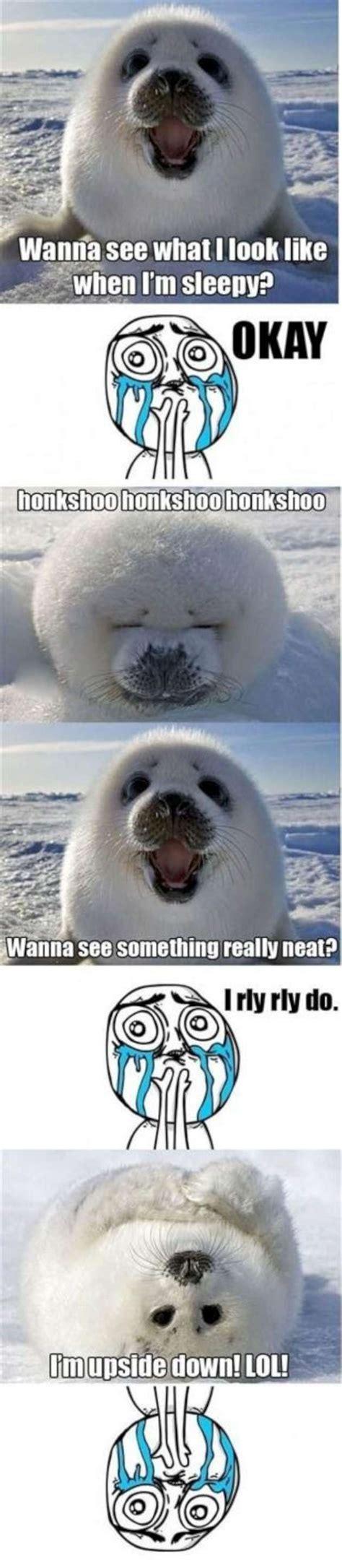 For Seal Meme - cute seal meme w630
