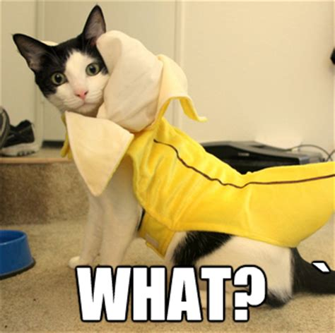 Banana Meme - quot i think we owe the potato an apology quot by paul nobles eat to perform