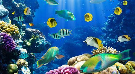 Fish Background Fish Desktop Wallpaper 62 Images
