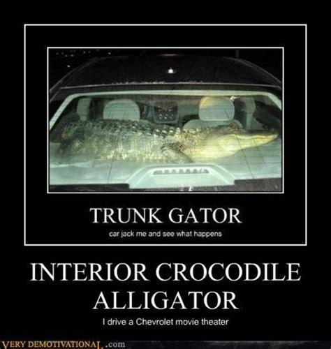 Alligator Memes - alligator meme 28 images alligator memes 28 images alligator imgflip alligator florida