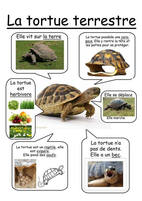fiche tortue terrestre tortue
