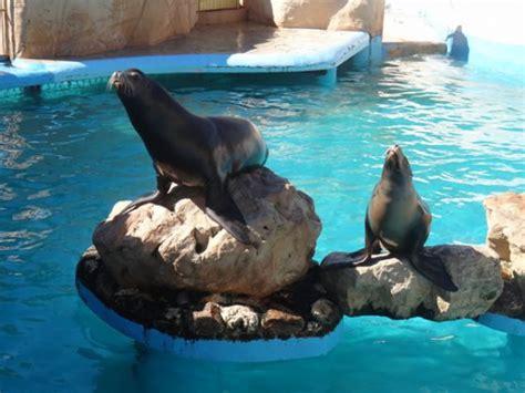 aquarium cote d azur aquarium d antibes 28 images parkatem attractions soft parc d attraction provence antibes