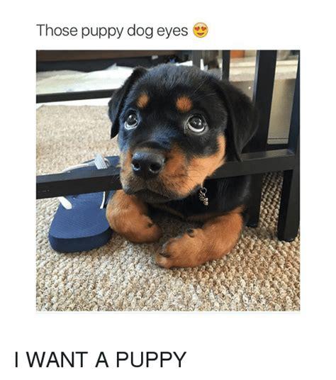Puppy Dog Eyes Meme - search puppy eyes memes on me me