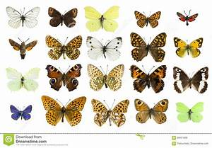 Collage Different Butterfly Species Stock Photo - Image of ...