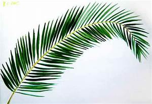 How to draw a Coconut Palm Tree