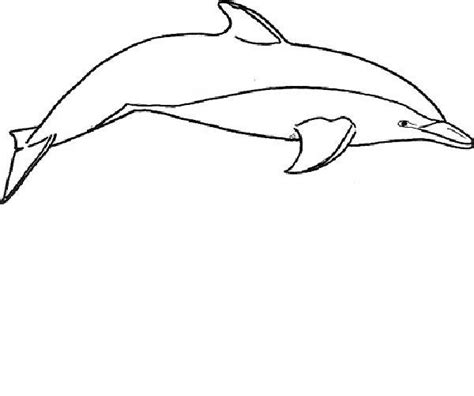 Free Printable Dolphin Pictures, Download Free Clip Art, Free Clip Art On Clipart Library