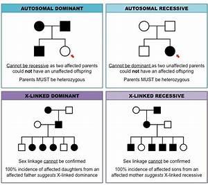 pedigree charts: inheritance cheat sheet   Teaching ...