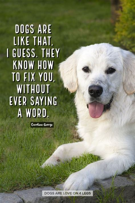 funny quotes dogs    dog dog quotes