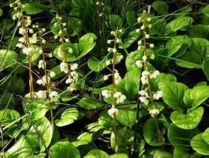 Розацеа экзема псориаз лечение травами
