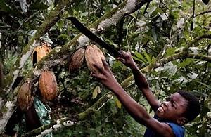 Human Rights and Child Labour | Make Chocolate Fair!