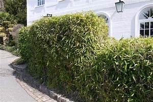 Sichtschutz Aus Pflanzen : sichtschutz garten hecke ~ Michelbontemps.com Haus und Dekorationen