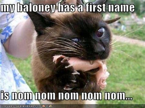 Nom Nom Nom Meme - nom nom nom kitteh funny sarcastic and mean memes pinterest