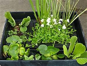 Miniteich Pflanzen Set : standort ~ Buech-reservation.com Haus und Dekorationen