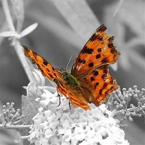 Was Machen Schmetterlinge Im Winter : der schmetterling ist in die rose verliebt heinrich heine ~ Lizthompson.info Haus und Dekorationen