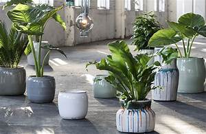 Plante D Intérieur Haute : d co id es id es de d co et inspirations qui donnent vie ~ Dode.kayakingforconservation.com Idées de Décoration
