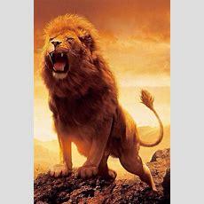 The Lion Of Tribe Judah My Beloved Pinterest Beautiful Roaring Wallpaper Widescreen Free